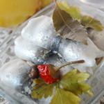 Маринованные рулетики салаки с луком